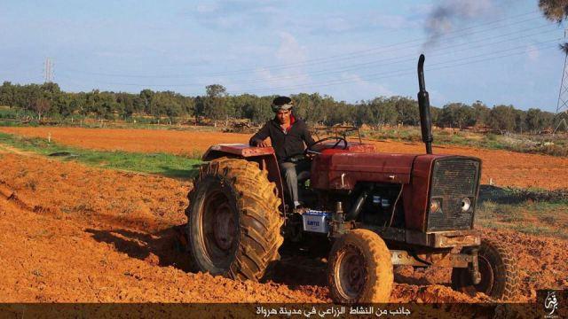 Cultivando la tierra en Harawah 23-11-15